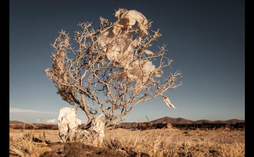 """Copacii de plastic"", o mica parte a unei mari probleme"